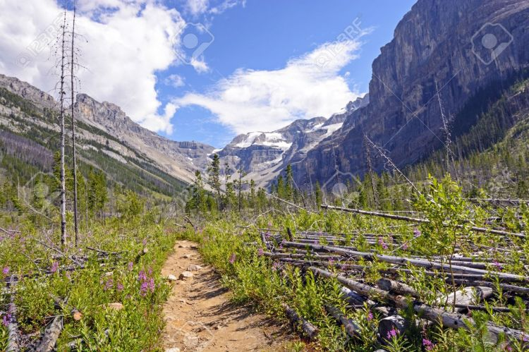 21730608-The-Stanley-Glacier-trail-In-Kootenay-National-Park-in-British-Columbia-Stock-Photo