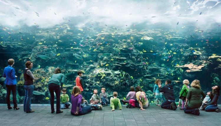 struth_-_aquarium